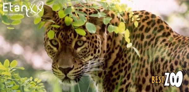 Best Zoo actie